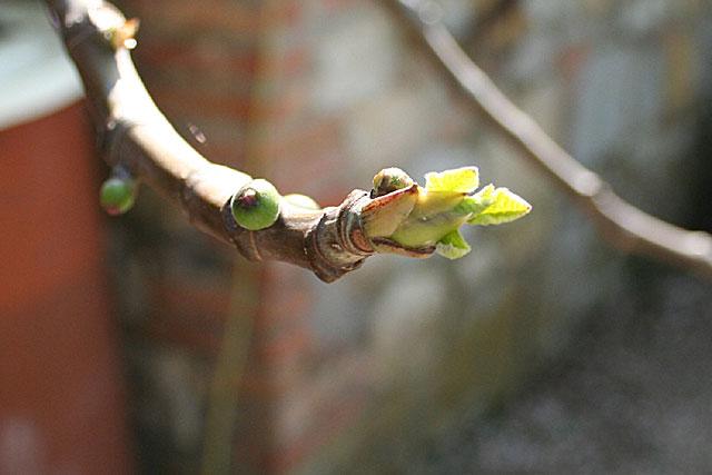 Feigenbaum im April